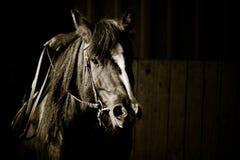 Portrait of horse Stock Photo