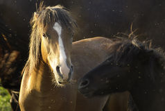 Portrait horse 3. Free horse on the grassland and mosquito stock photo