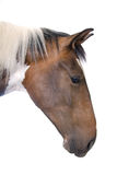 Portrait of a horse. Isolated on a white background Stock Image