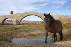 Portrait of a horse against blue sky Stock Photos