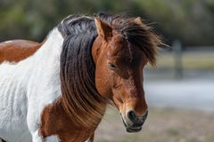 Portrait of horse Royalty Free Stock Photography