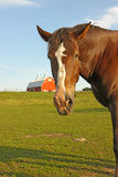 Portrait of a horse with a barn in the background Royalty Free Stock Photo
