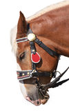 Portrait of horse in bridle Stock Photo