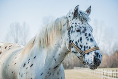 Portrait of horse Stock Photo