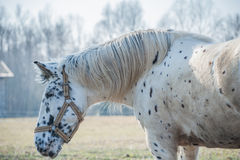 Portrait of horse Royalty Free Stock Images