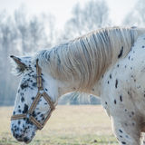 Portrait of horse Royalty Free Stock Image