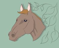 Portrait of a horse on a colored background, vector illustration