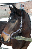 Portrait of a horse Stock Photos