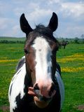 Portrait of Horse in countryside Stock Photo