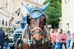 Portrait of horse-drawn carriage horse Stock Images