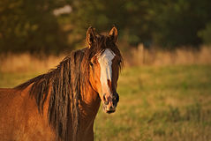 Portrait of a horse free on a field in Argentina Royalty Free Stock Image
