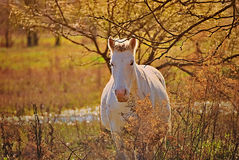 Portrait of a horse free on a field in Argentina Stock Photo
