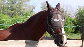 Portrait of a horse in a funny unusual mask slowly turns his head and looks around at the farm