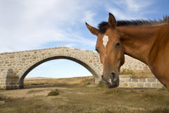 Portrait of a horse heatd against blue sky Stock Photography