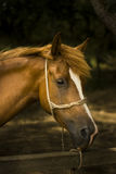 Portrait of a Horse. Just a Horse Resting in the Shadows in a Hot Summer Day stock photography