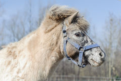 Portrait of horse pony Stock Photo