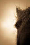 Portrait of a horse from Shropshire, England. Portrait of a horse in sepia from the Shropshire countryside in England Royalty Free Stock Photos