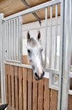 A portrait of horse in stable behind cage stock image