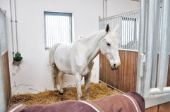 A portrait of horse in stable behind cage Royalty Free Stock Photo