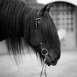 Portrait of a horse. Stock Image