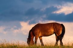 Portrait of a horse standing with his back to the sun at sunset on the field and sky. Background stock photography