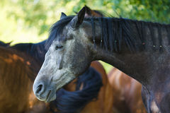Portrait of horse at summer time Stock Image