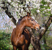 Portrait of a horse under the tree royalty free stock photo
