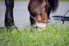 Portrait of a horse who eats a juicy green grass Stock Photography