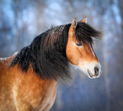 Portrait of horse in windy forest. Stock Photo