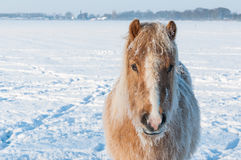 Portrait of a horse in winter Stock Photo
