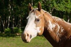 Portrait of a horses head. Profile portrait of a horses head Stock Image