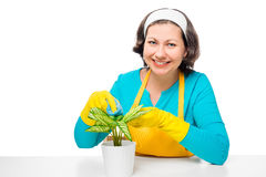 Portrait of a housewife with a flower in a pot at the table Stock Photos