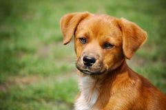 Portrait-Hund Lizenzfreies Stockfoto