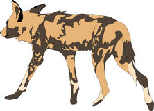 Portrait of a hungry and firerce wild dog. Hand drawn vector illustration  on white background Stock Photos