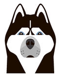 Portrait of a Husky in a minimalist style Royalty Free Stock Photo