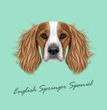 Portrait illustré par vecteur de chien d'épagneul de springer anglais illustration de vecteur