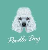 Portrait illustré par vecteur de chien de caniche illustration de vecteur