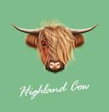 Portrait illustré par vecteur des bétail des montagnes illustration libre de droits