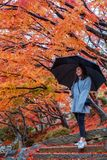 A beautiful asian woman holding an umbrella while standing among red and yellow colors tree leaves in autumn royalty free stock image