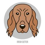 Portrait of Irish Setter. Vector illustration in style of flat Royalty Free Stock Image