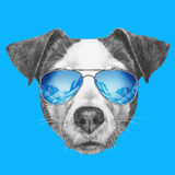 Portrait of Jack Russell Dog with mirror sunglasses. Stock Photos