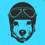 Portrait of Jack Russell with Vintage Helmet. Vector Royalty Free Stock Image