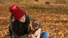 Portrait of girl with lovely dog in yellow foliage stock footage