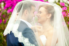 Portrait of just married couple under white veil Stock Photos
