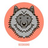 Portrait of Keeshound. Vector illustration in style of flat Stock Images
