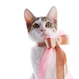 Portrait of a kitten with a bow. Stock Photos