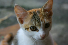 portrait of kitten Stock Images