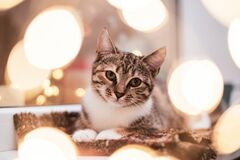 Portrait of a kitten framed by bokeh from a Christmas garland