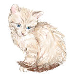Portrait of the kitten Royalty Free Stock Images
