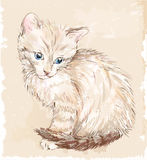 Portrait of the kitten Royalty Free Stock Photography